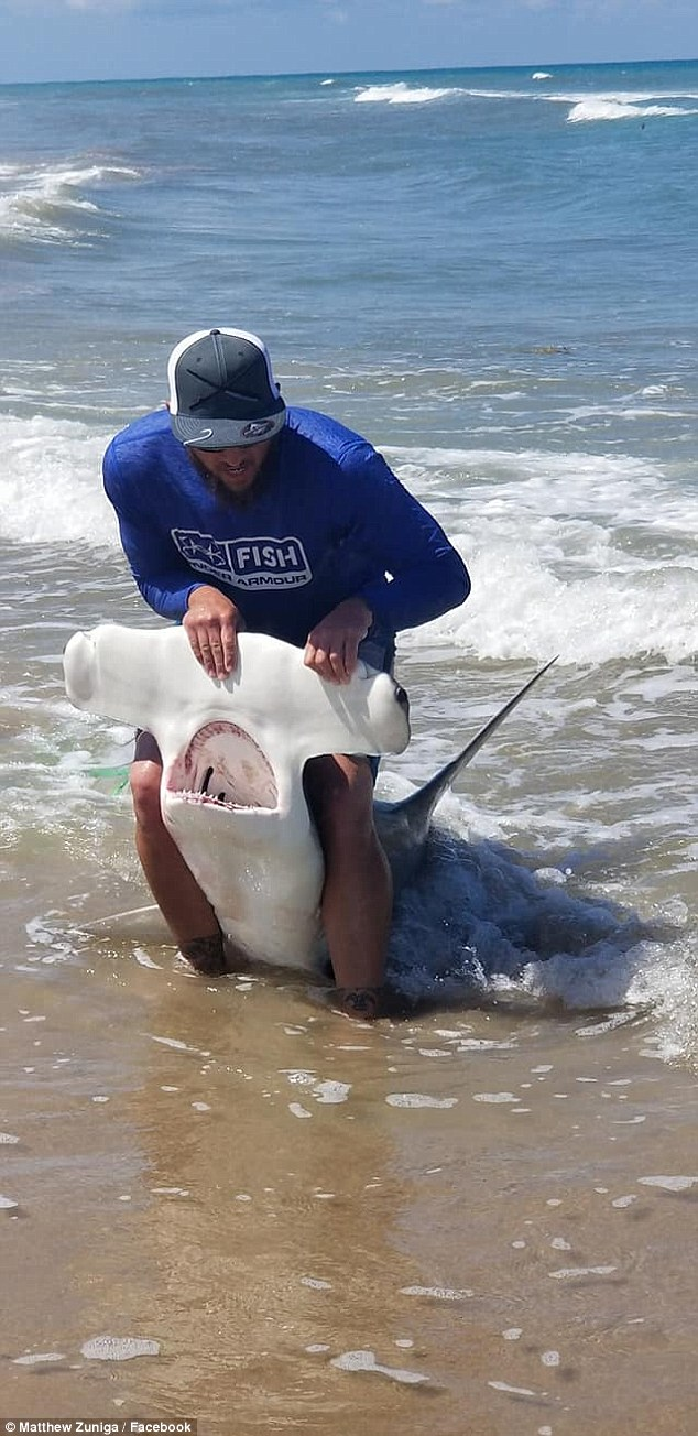 The 31-year-old has caught hammerhead sharks (pictured) in the past 20 years
