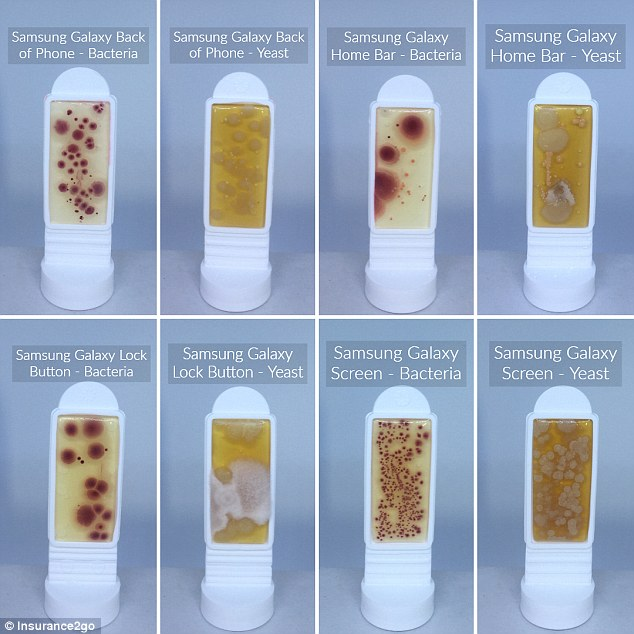 Horrifying images show how your smartphone could be covered in up to ten times as much bacteria as a toilet seat. Pictured are the levels of bacteria and yeast found on different locations of a Samsung Galaxy 8 handset. The highest levels of bacteria of 40 CFU per cm2 was found on the screen (bottom row, second from right)
